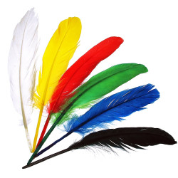 Indian wings set of 17...