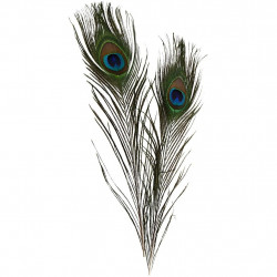 Peacock feathers set of 3 pcs